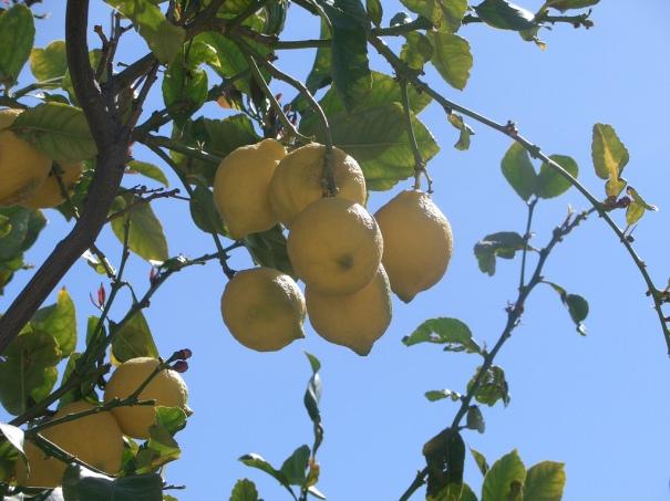 """Lemon tree"", de Martin Belam"