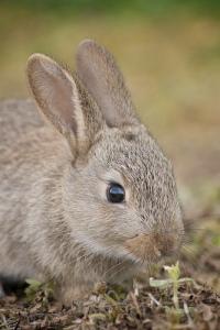 """Urban bunnies"", de Nick Thompson"