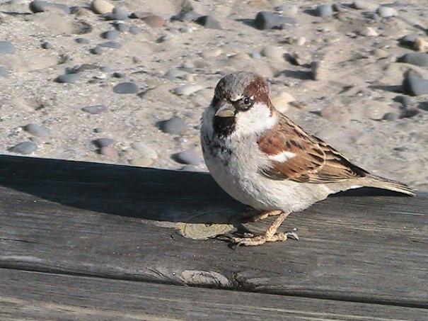 Ocell, d'Aiguaclara