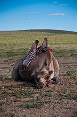 """""""Tired Camel"""", de Mark Fischer"""