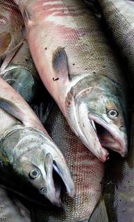 """Fish"", Evgeny Galanin, Flickr"