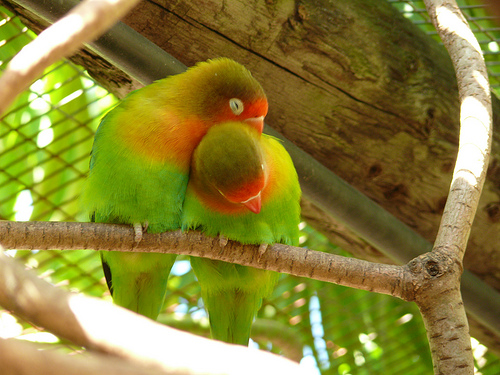 """""""I Love You!"""", de Mara 1, al Flickr"""