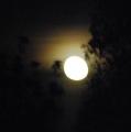 La lluna, la pruna