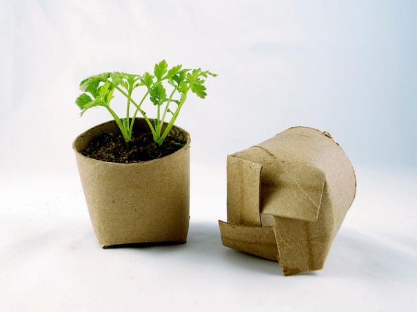 """Seedling in a toilet paper roll repurposed as a mini planting pot"", de girlingearstudio, Flickr"
