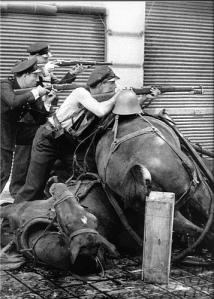 """Lluitant darrera d'una barricada de cavalls morts (Barcelona, 1936), fotografia d'Agustí Centelles penjada per """"Recuerdos de Pandora"""" al Flickr"""